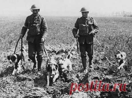 Заблудившаяся собака и еще 4 идиотских причины, из-за которых начинались войны