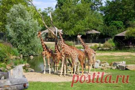 Зоопарк Бляйдорп в Роттердаме (Нидерланды)