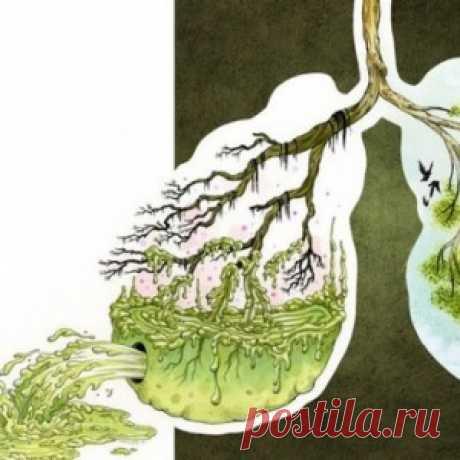 Очищаем организм от паразитов и уменьшаем отложения жира. - МирТесен