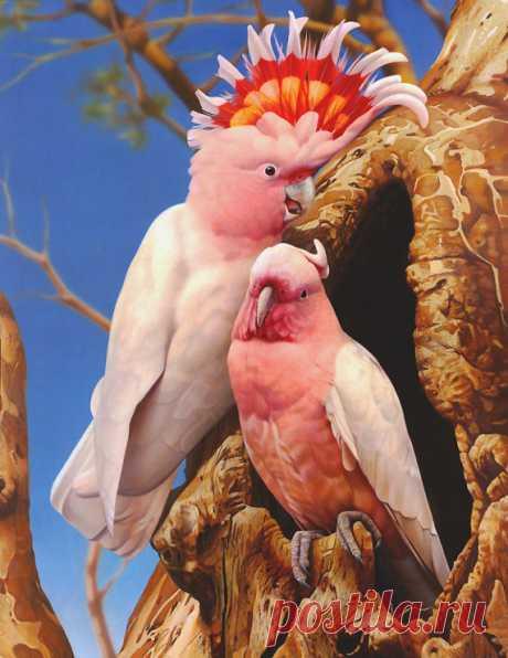 Gallery.ru / Фото #1 - Мир дикой природы.Ego Guiotto - Vladikana