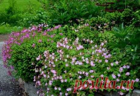 Растения, отпугивающие мух и комаров
