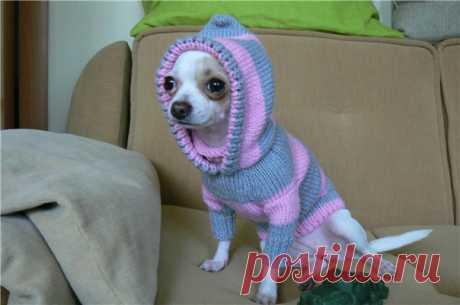 Вязание для собаки чихуахуа - Вязание одежды для собак. Как связать одежду для собаки