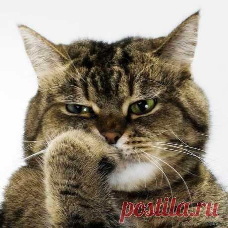Пушистые мыслители. Подборка фотографий задумчивых котиков, которая наверняка поднимет вам настроение! | Позитив от Мяу | Яндекс Дзен