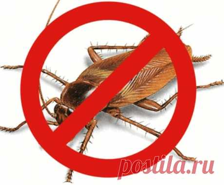Как быстро избавиться от муравьев - Советы на каждый день