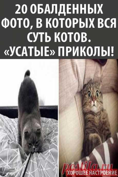 20 обалденных фото, в которых вся суть котов. «Усатые» приколы!