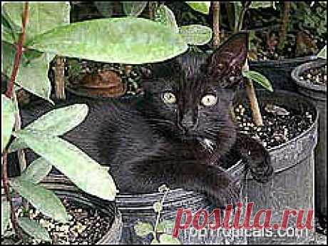 Комнатные растения и кошки | Самоцветик