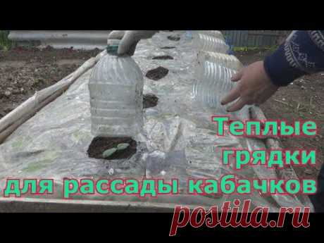Устройство теплых грядок для рассады кабачков и тыквы - YouTube