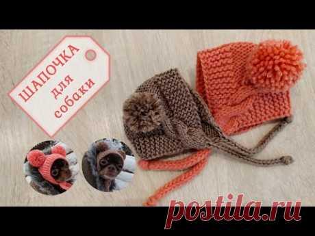 Шапочка для собаки, вязание спицами