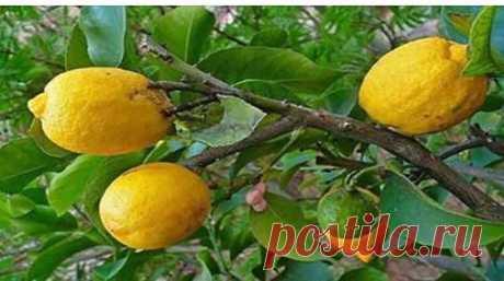 Пейте воду с лимоном вместо таблеток, если у вас есть какие-либо из этих проблем!