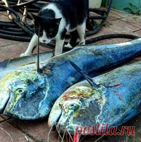 Кошки-рыбки. Подборка забавных фото котов, желающих заполучить рыбку. Улыбнитесь! )) | Мечтательная кошка | Яндекс Дзен