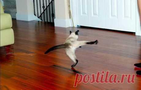 Степ-танцор