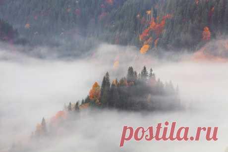 «Карпатские туманы». Черногорский хребет. Автор фото — Антон Петрусь: