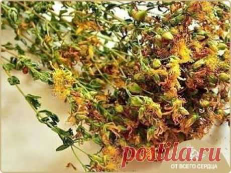 USUAL ST. JOHN'S WORT - BUT AS RAISES HAPPINESS HORMONES! \u000a\u000aThe bad mood kills on the spot and even easily copes with a depression because it actively stimulates production of hormone of happiness (serotonin) in an organism! \u000aThe St. John's Wort — ideally strengthens nervous system. \u000a\u000aIn crisis life situations it is useful to accept from three to six cups of tea with a St. John's Wort and in addition 20 drops of tincture of a St. John's Wort 3 times a day. \u000aTincture is done so: 50 g of the dry crushed St. John's Wort grass for...