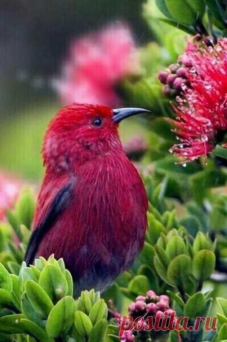 Когда у нас красиво в сердце - Цветами всё цветёт вокруг... Мы видим как плетёт паук Свою затейливую сетку... И птичек пенье поутру Мы слышим сердца красотой... Нам открывается порой Само Звучанье Жизни... И струну, Простая капелька задев, Играет свой простой припев, Гоня с души грустинку-мглу... Когда у нас красиво в сердце - Цветами всё цветёт вокруг И ширится сияньем круг, Круг Сердца... Сердца без ключа... Тихонько там горит свеча... Открыто Сердце... ....