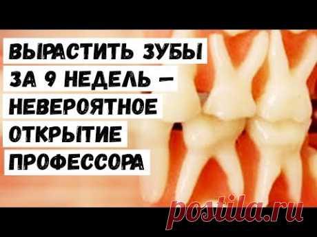 Вырастить Зубы за 9 Недель — Невероятное Открытие Профессора