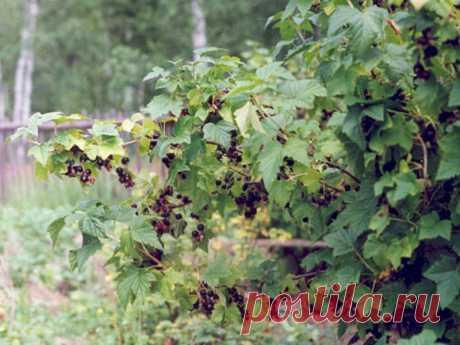Советы огородников для увеличения урожая — 6 соток
