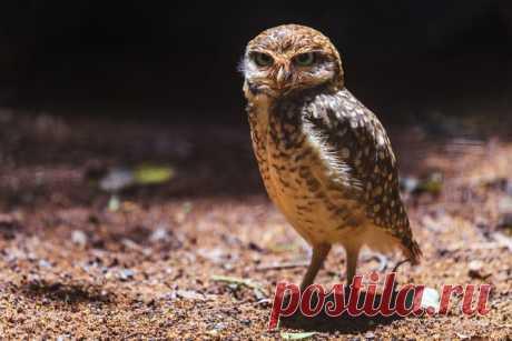 «Невыспавшийся». Парк экзотических птиц в Бразилии. Автор фото — Антон Петрусь: nat-geo.ru/photo/user/50290/