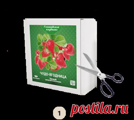 Голландская клубника - свежие ягоды круглый год