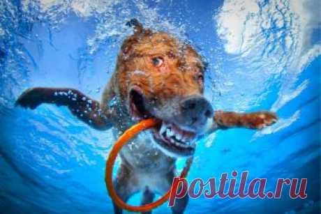 Лучшие фотографии животных под водой » Notagram.ru Самые интересные, забавные и смешные фотографии животных под водой. Как плавают слоны, лошади, медведи, собаки и тигры. Животные под водой.