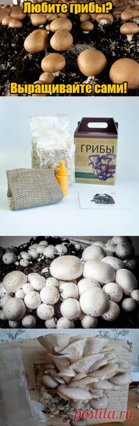🍄🍄🍄Собирайте урожай грибов прямо в квартире! Круглый год, без особых усилий и затрат.  🔝🔝🔝 Эко-грибницы «Золотой урожай» - мечта любой хозяйки! Вы можете выращивать шампиньоны, вешенки, лисички, опята и белые грибы. ☝☝☝Коробка очень компактная, ее можно спрятать под ванную или на балконе. Главное условие – опрыскивать ее специальным удобрением, которое идет в комплекте. Первый урожай уже через неделю! 😉 😉 😉 Попробуйте вкусные домашние грибы, и вы уже