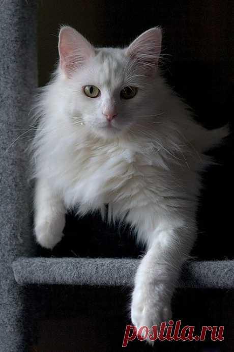 Just chillin' | Flickr - Photo Sharing!
