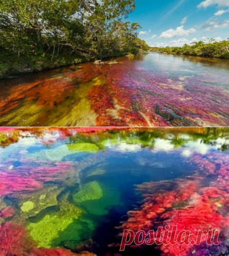 Canio-Cristales: the most motley river in the world