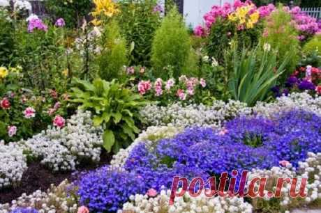 WHAT FLOWERS CAN BE SOWED TOWARDS THE WINTER