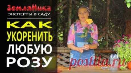 Надежный способ укоренить любую розу. 0+ В этом ролике Ольга Воронова поделится способом, как легко и быстро можно укоренить розу из букета. ______________________________________ Заходите на сайт h...
