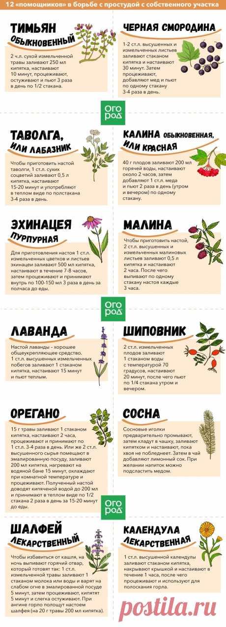 """12 """"помощников""""в борьбе с простудой с собственного участка"""