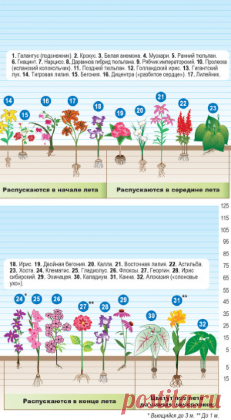 3 схемы для выбора и сравнения растений  для цветника.   Для дачников.ру