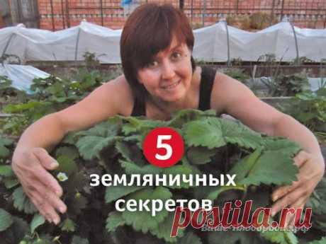 5 земляничных секретов