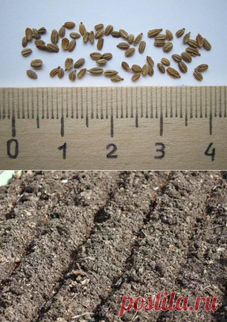 Отличная идея как сеять мелкие семена | 6 соток