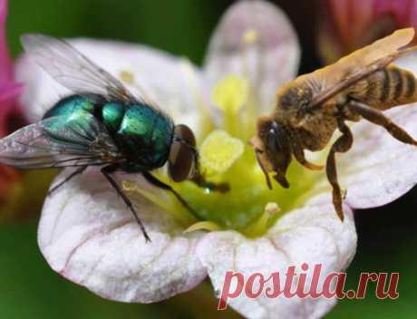 Кто ты - муха или пчела? (притча) » Женский Мир