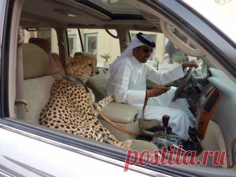 Саудовский шейх умер... при попытке изнасиловать осла