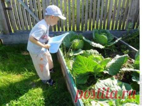 Когда нужо прекратить полив моркови, капусты и свеклы? | Твоя усадьба | Яндекс Дзен