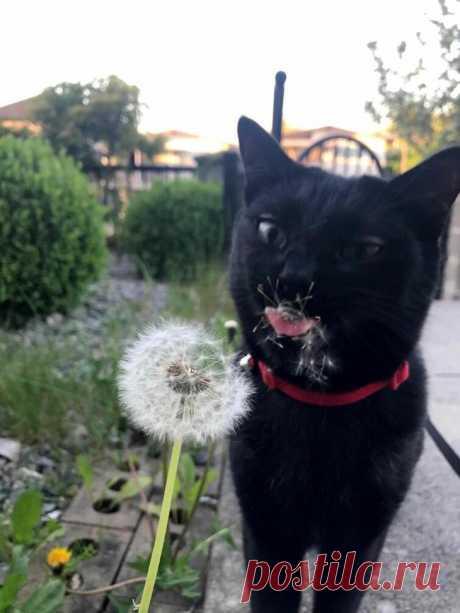 20 странных вещей, которые делают кошки. Их поймут только владельцы этих пушистых варежек