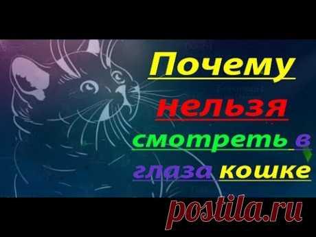 Почему нельзя смотреть в глаза кошке 💯 😼😼😼 Почему нельзя смотреть в глаза кошке 🔥💥🔥 Канал Удивительный мир - https://goo.gl/zD15BV Хотите узнать, почему нельзя смотреть в глаза кошке, тогда Вы на прав...