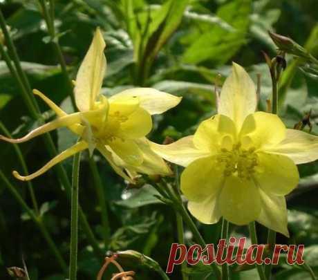 Обзор неприхотливых цветов для начинающих садоводов