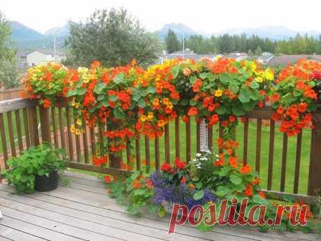 Вьющиеся цветы для дачи: названия и описания самых красивых видов