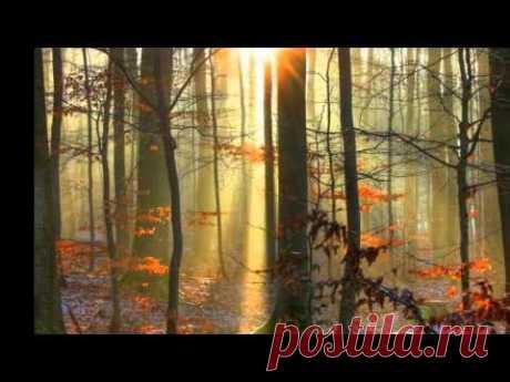 Serenade ~ David Garrett ~