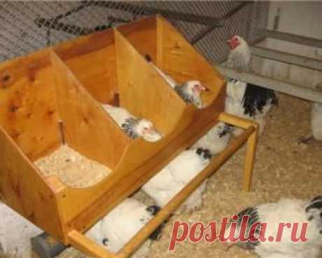 Насесты, гнезда, клетки для кур в домашних условиях, своими руками. | Фермер без хлопот-все о сельском хозяйстве