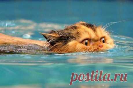Испуганный пловец