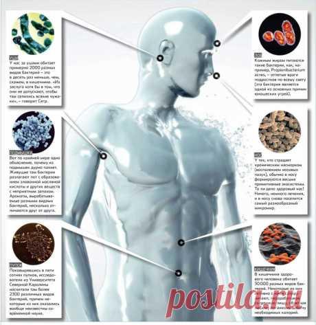 Бактерии которые живут в нашем теле