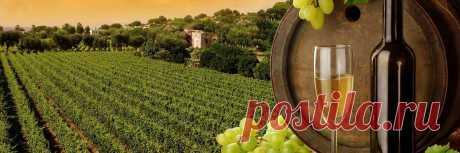 Подкормка клубники (земляники) во время плодоношения и после цветения, внекорневая подкормка, куриным пометом, коровяком, золой, йодом, крапивой, мочевиной, борной кислотой, рецепты