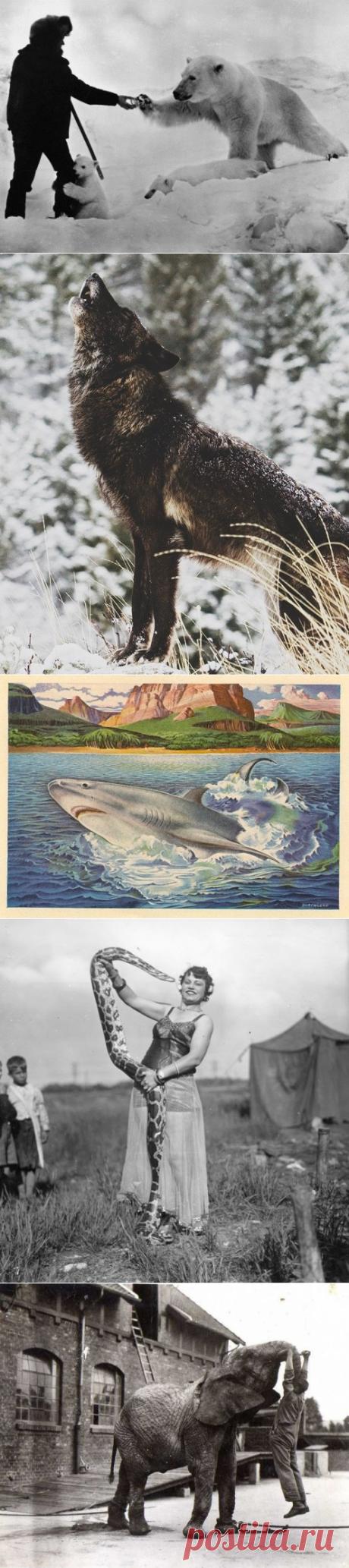 5 животных, чья опасность для человека сильно преувеличена - Мир Путешествий