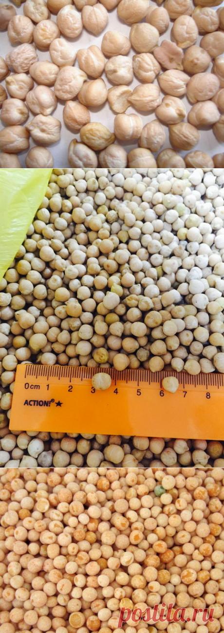 Использование нута на пищевые и кормовые цели - БиоКорова