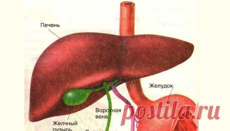 Почему происходит выброс желчи в желудок и как лечить рефлюкс