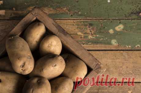 Как правильно хранить картофель?   ВОПРОС-ОТВЕТ   АиФ Барнаул
