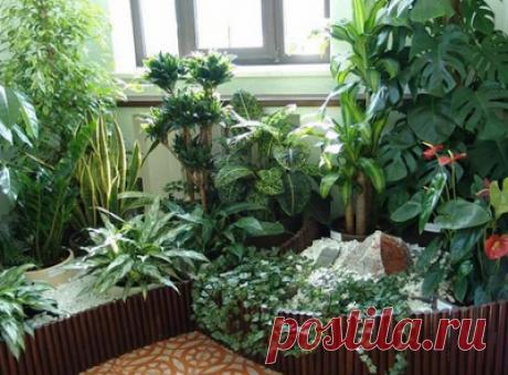 6 бабушкиных советов для комнатных растений. Совет 1. Зимой и осенью цветы нужно поливать утром. Летом и весной – вечером...