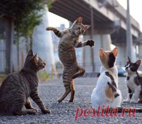 Урок танцев:)
